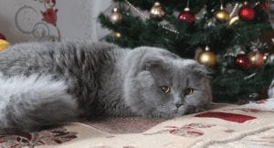 5 Ways To Catatize™ Your Home for the Holiday