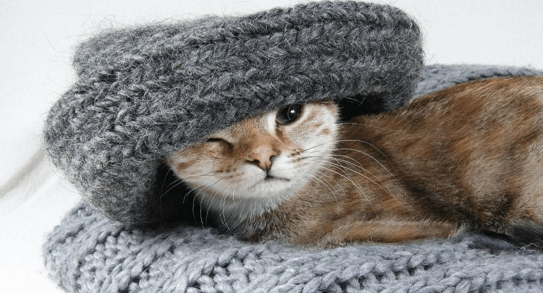 Important Ways to Prepare Your Home for a New Kitten