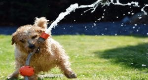 5 Warning Signs Your Dog Is Dehydrated