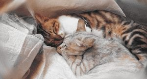 5 Reasons Your Cat Sleeps So Much