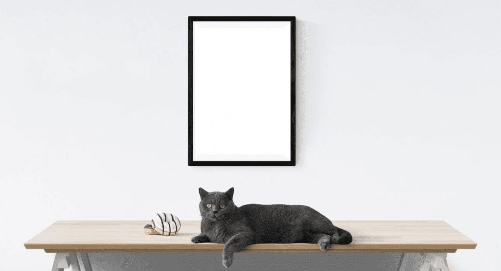 Tips For Adorning Your Home With Cat Decor: Decorating With Feline Accessories