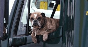 6 Steps to Help Moving Day Run Smoothly for Dog Owners