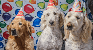 Tips for Planning A Dog Birthday Party This Autumn
