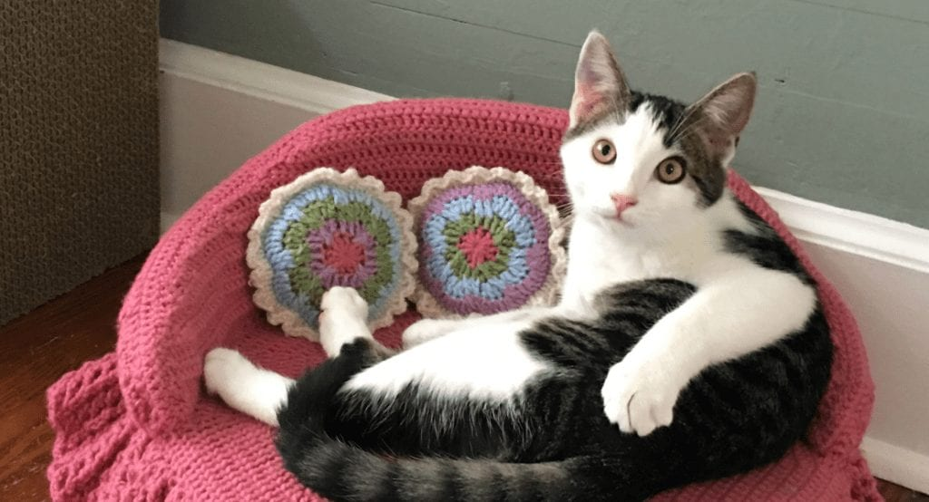 What Is The Hottest Item Being Crocheted? This Teeny Tiny Cat Couch
