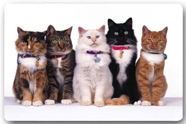 Cats Standing in a Row Floor Mat