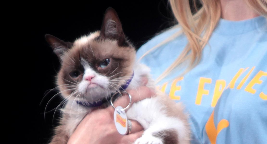 The Frown Seen Round The World: Remembering The Life Of Grumpy Cat