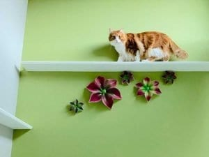36 Inch Catwalk Wooden Cat Shelf