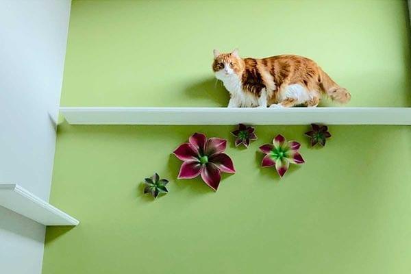 36 Inch Catwalk Wooden Cat Shelf