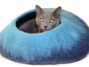 Blue Pet Cave