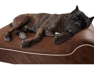 Bully Beds Orthopedic Memory Foam Dog Bed