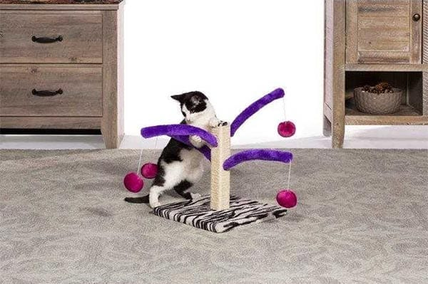 Bounce n Spring Cat Scratcher Toy