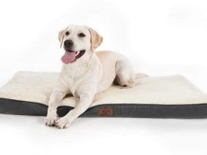 older dog bed