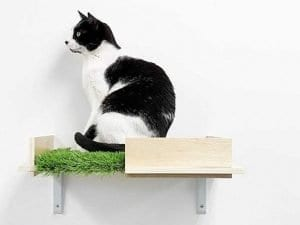 Canopy Box Cat Wall Shelves