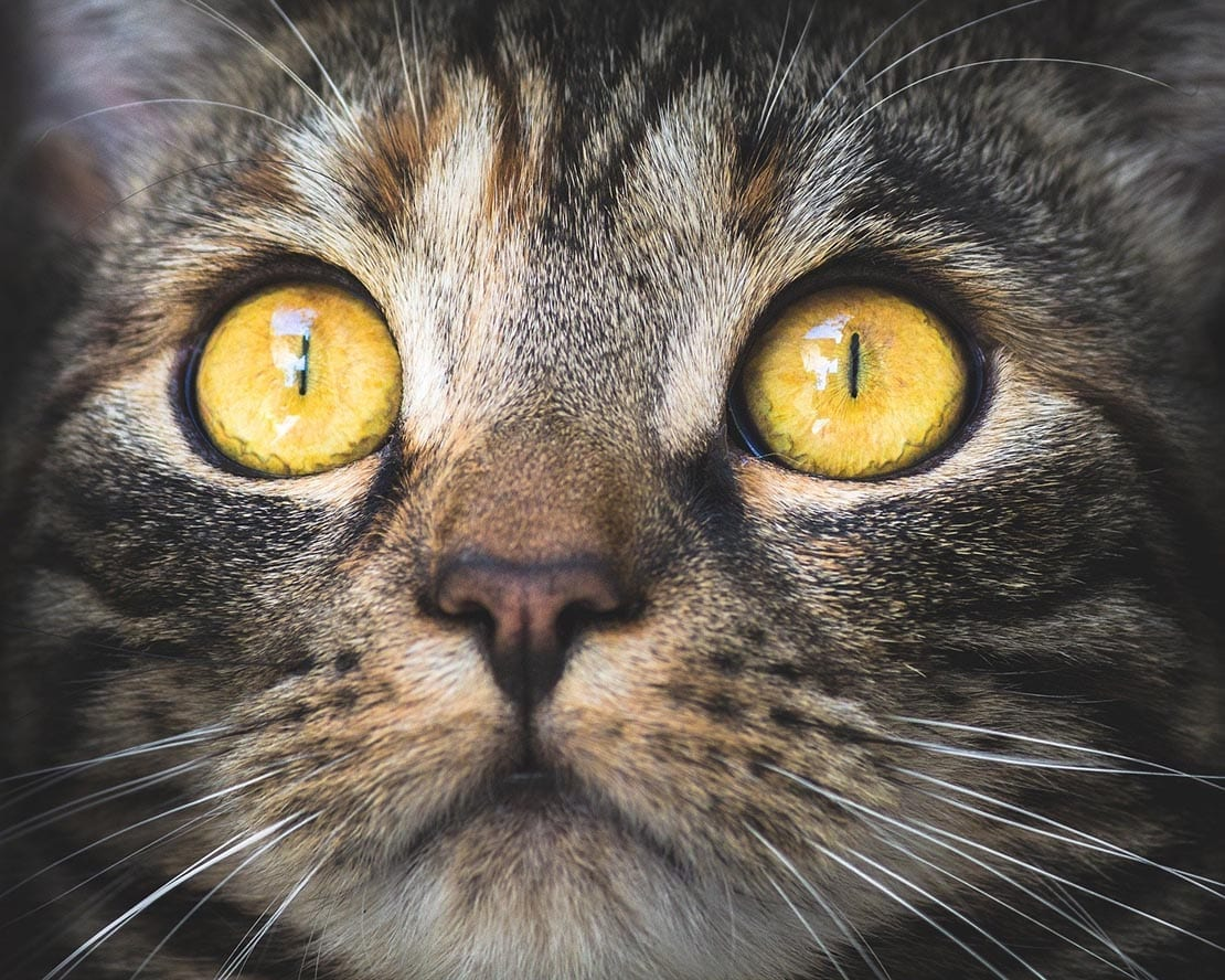 They Have 9 Lives, But Can Cats See in The Dark?