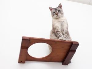 "18"" Escape Hatch Cat Shelf"
