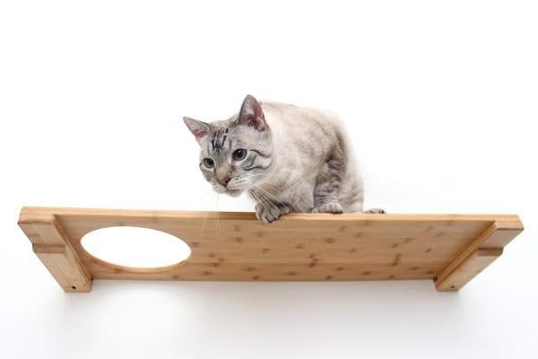 "34"" Escape Hatch Cat Shelf"