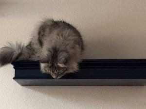 Classic Floating Cat Shelf