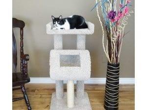Cat's Choice Cat Climber Cat Tree