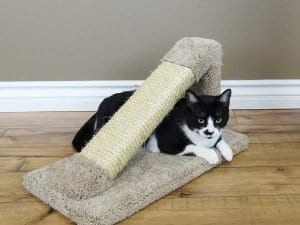 Cat's Choice Tilted Scratching Post