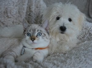 cat and dog food sharing