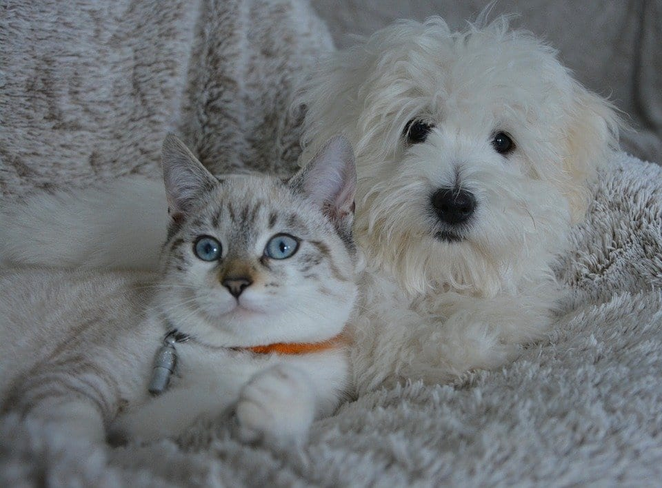 cat and dog food sharing