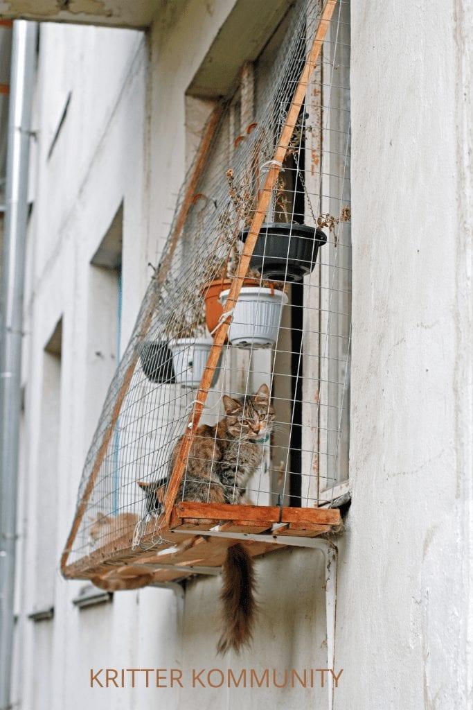 catio window