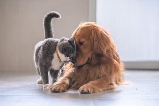 senior cat and dog
