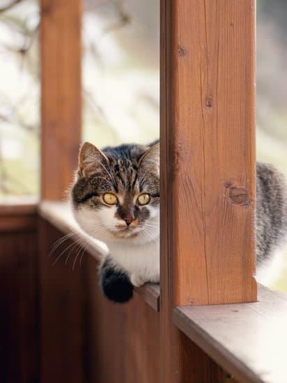 catio outdoor cat