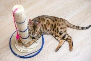 sisal cat scratching post