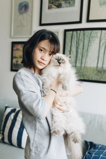 Himalayan cat and person