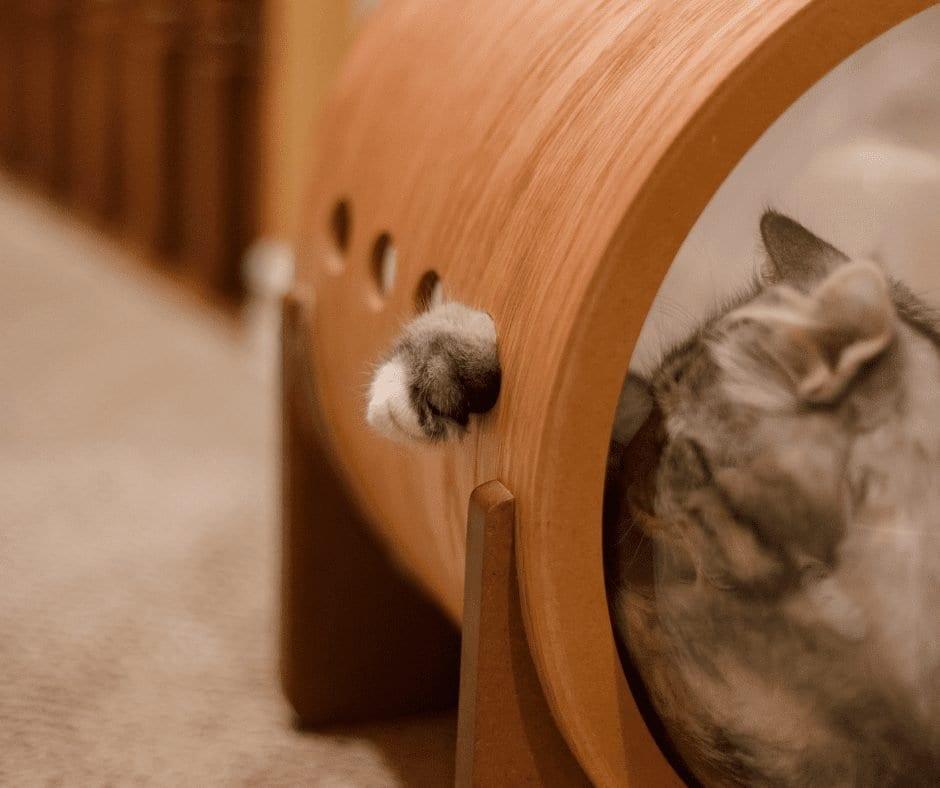 Portrait of small tricolor kitten of a cat. Premium Photo