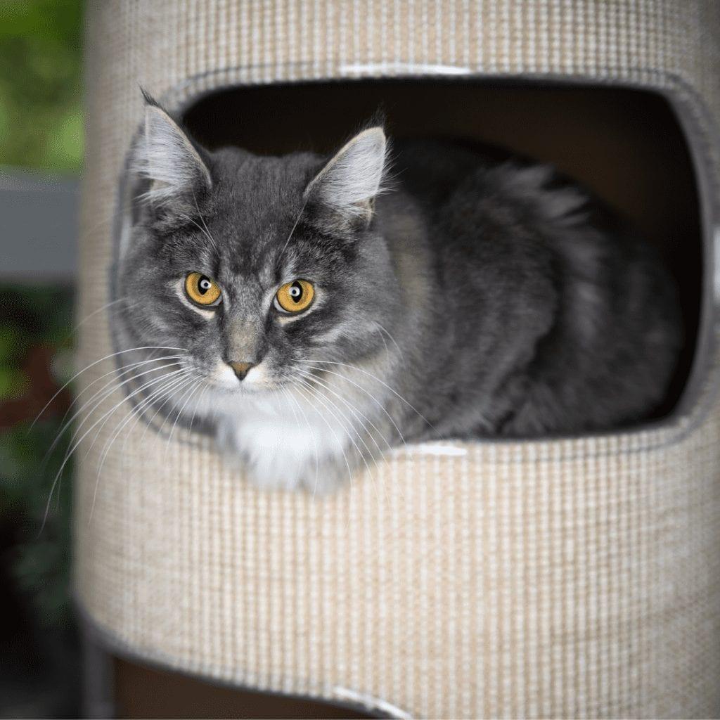 hide cat litter box