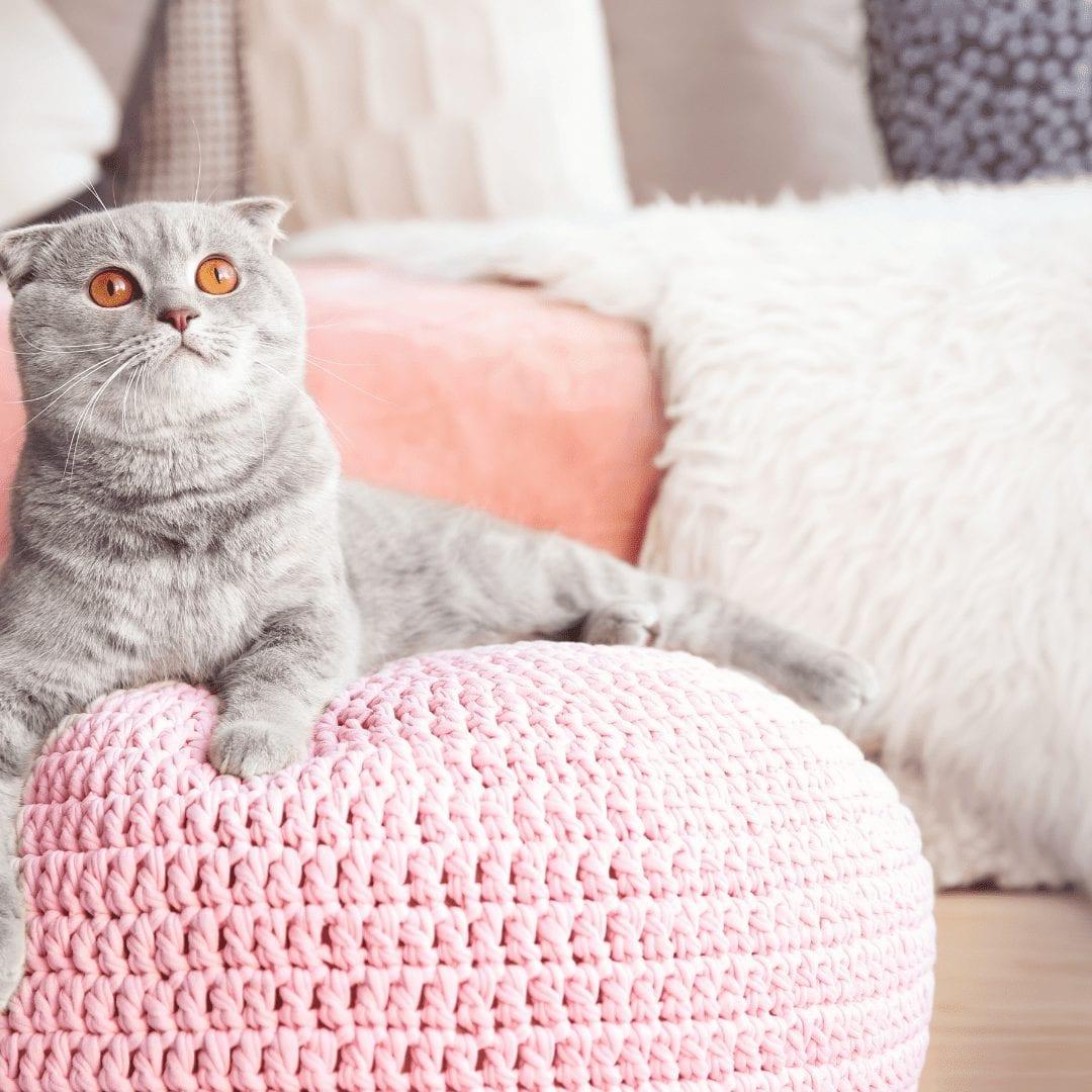 design ideas cat lovers
