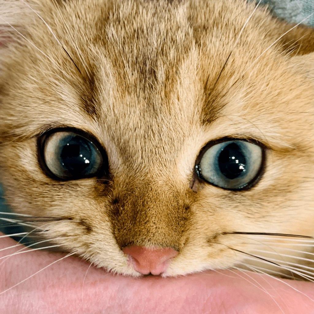 Why do Baby Kittens Bite So Much?