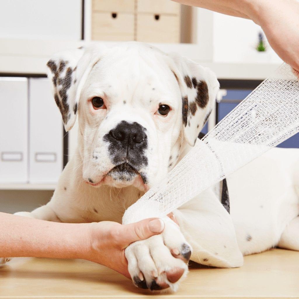 dog injuries