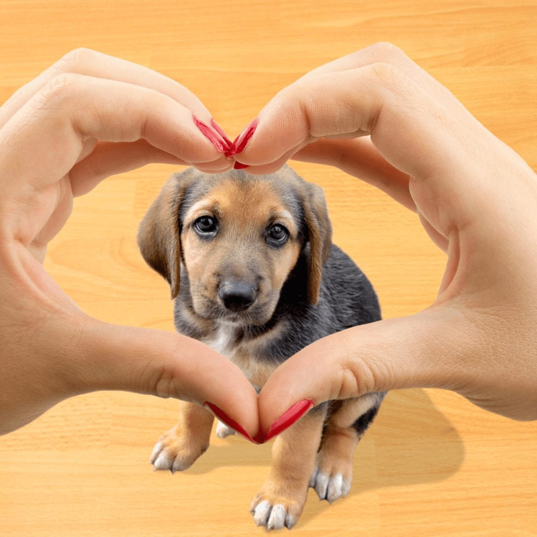 Is Grain-Free Pet Food Good For Your Pet?