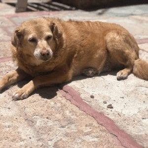 adopt an older dog