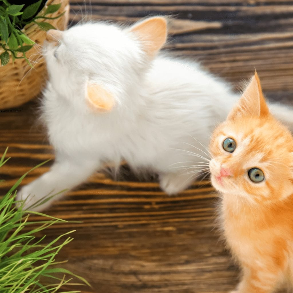 kittens and pet furniture