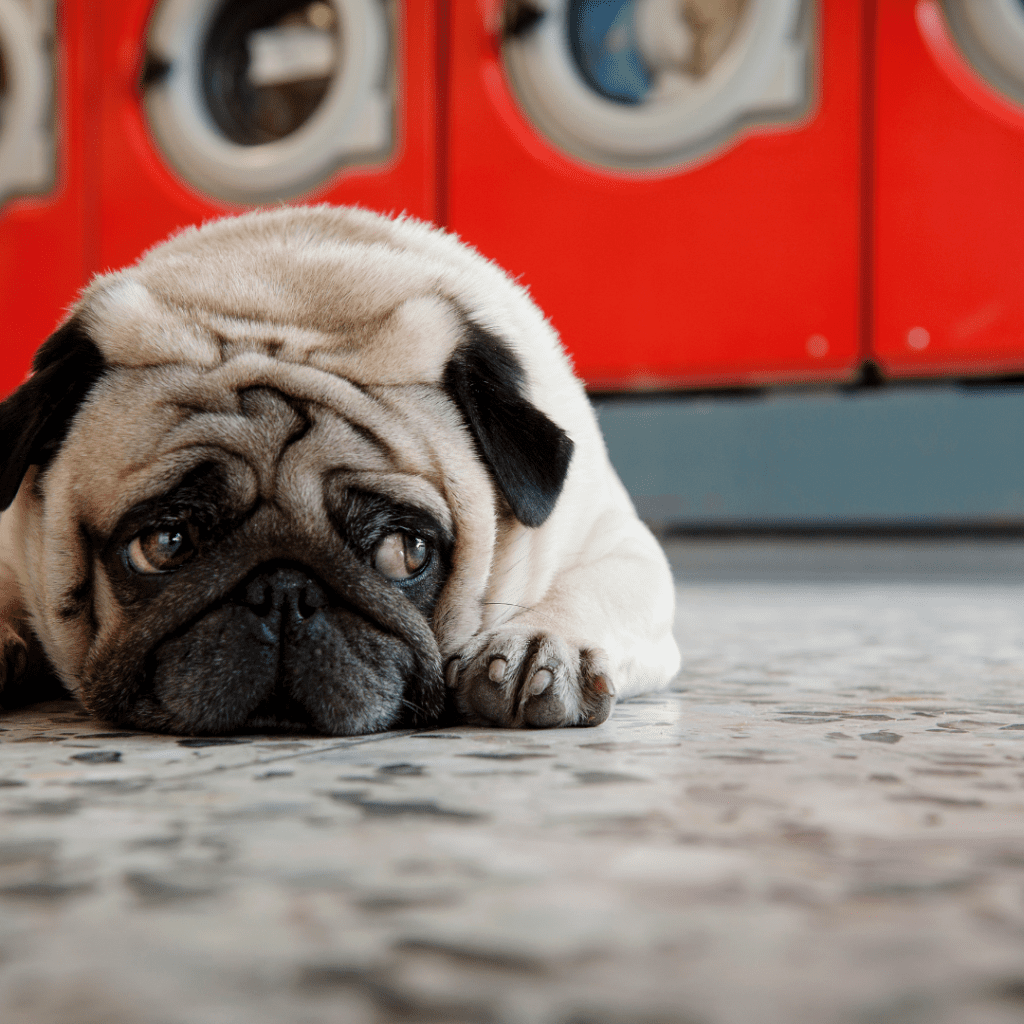 can my landlord kick my out for having a pet?