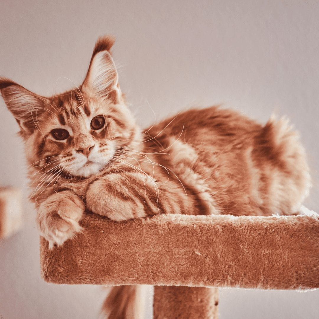 furniture for cats in small apartments