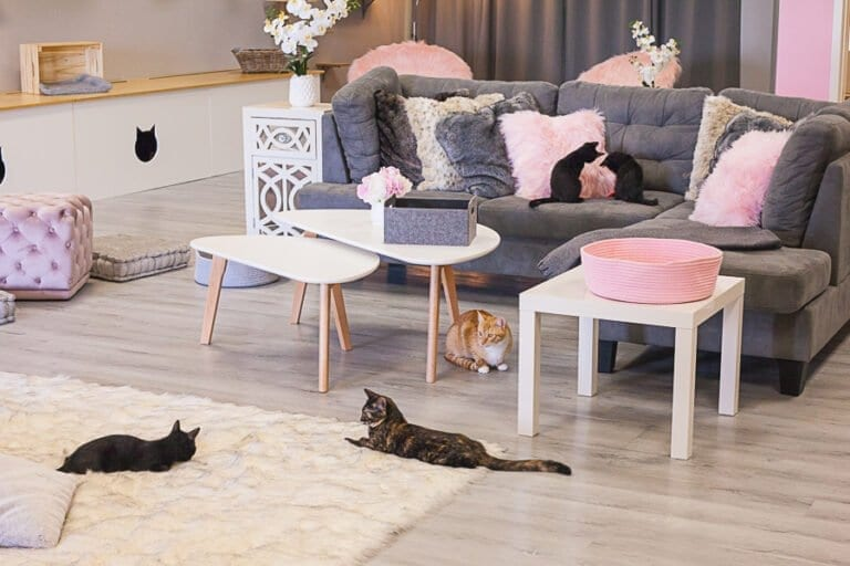 cat cafe directory