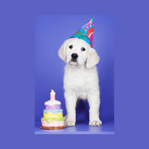 What do you do for your dog's first birthday?