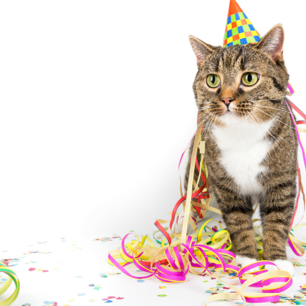 How To Have A Wow-Worthy Party For Your Cat