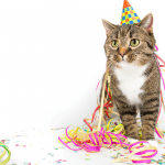 party for your cat