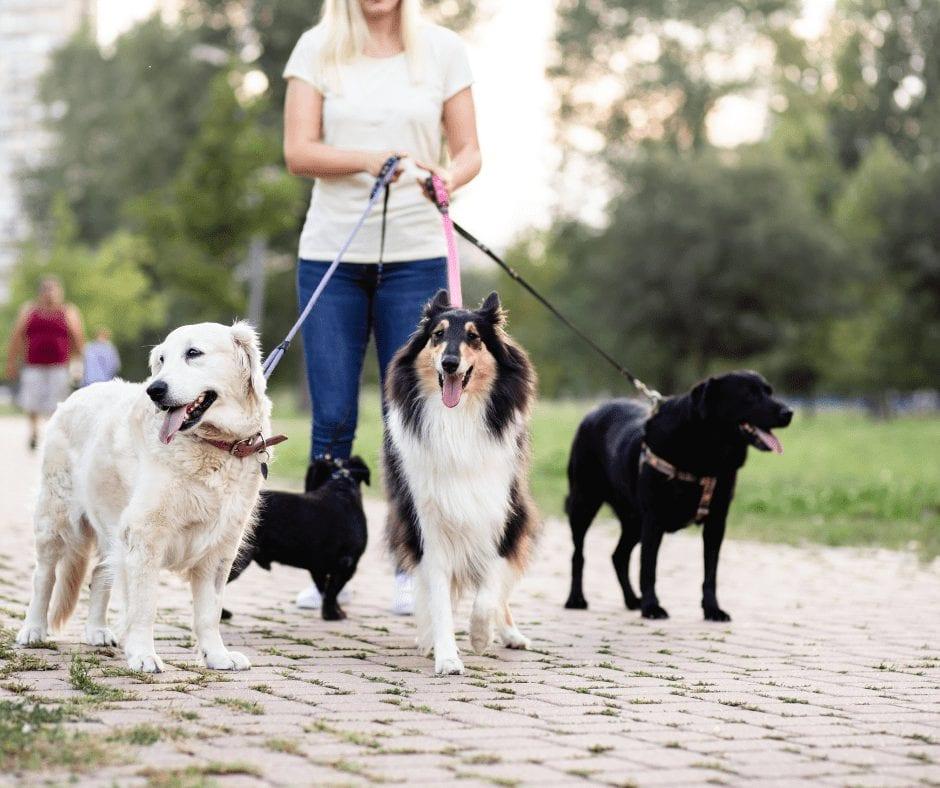 dog walker interview