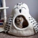 cat cave owl